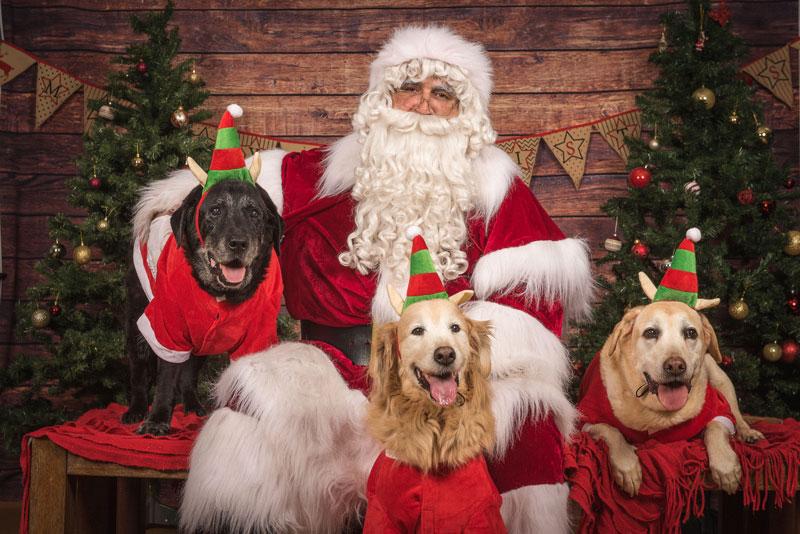 Pet Photography The Real Santa