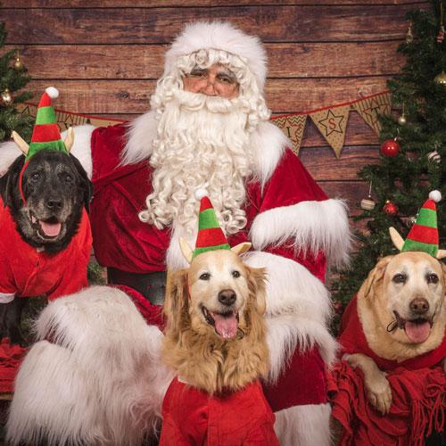 The Real Santa Doggos