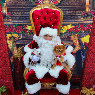 The Real Santa Sydney Pet Photography